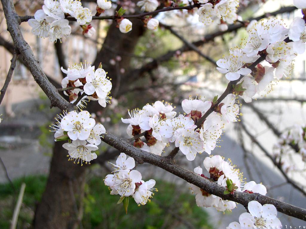 Flower13 1